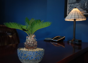 Plant View of Desk
